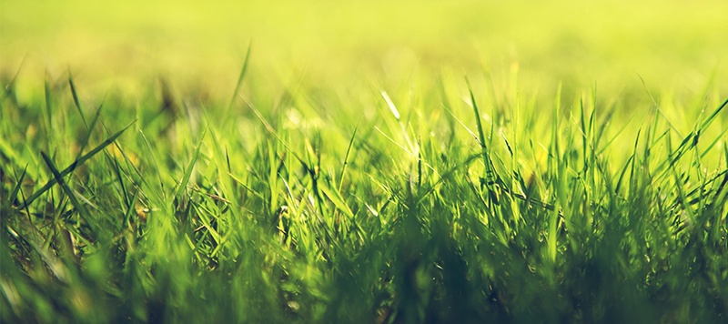 Close up of green grass in the sun