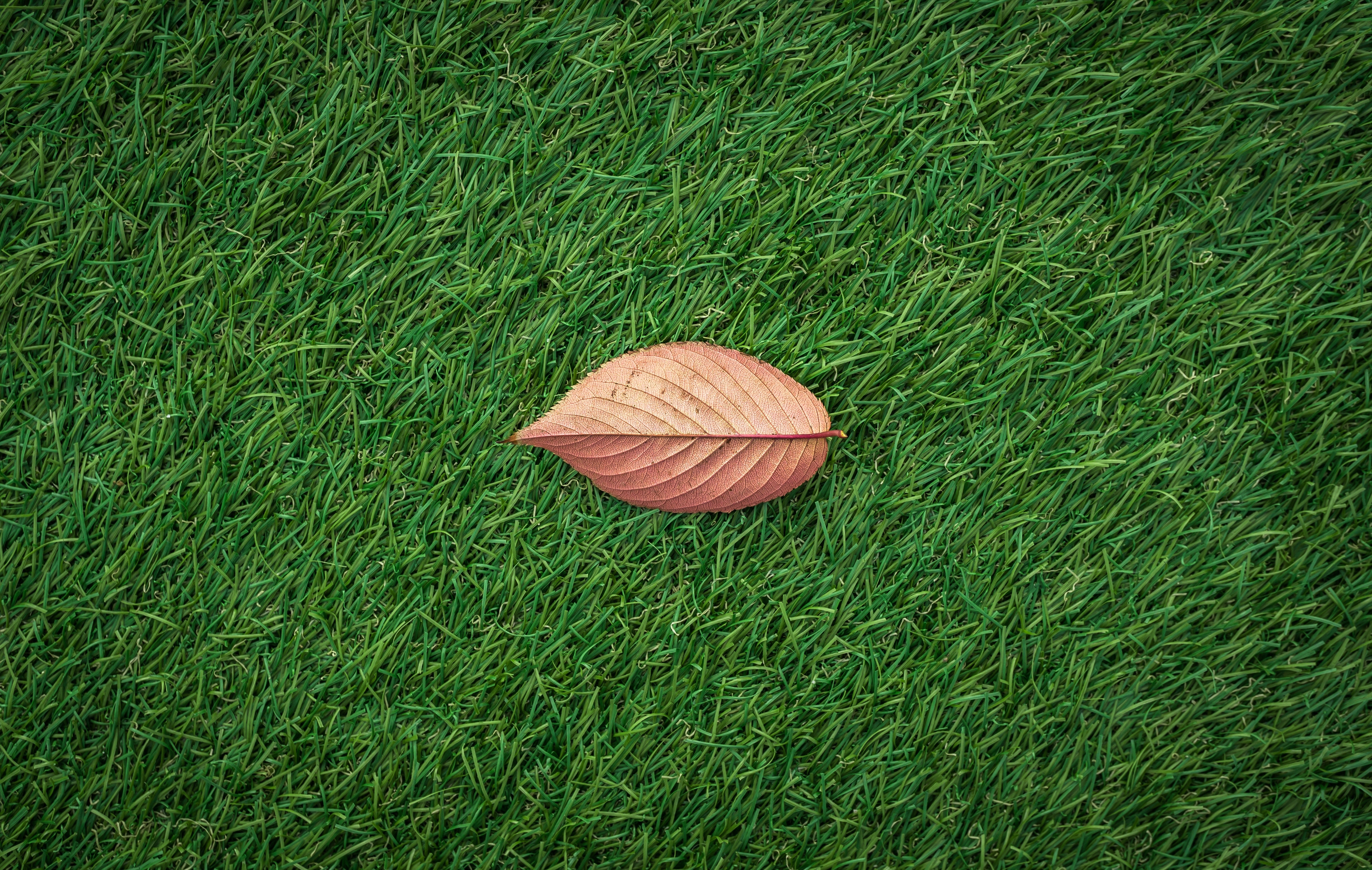 One autumn leaf on a manicured fall lawn care