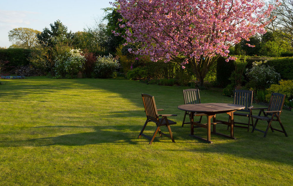 lush green backyard with picnic table and pink tree